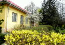 Весна в учнівському дендропарку (частина перша)