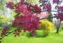 Весна в учнівському дендропарку, частина друга